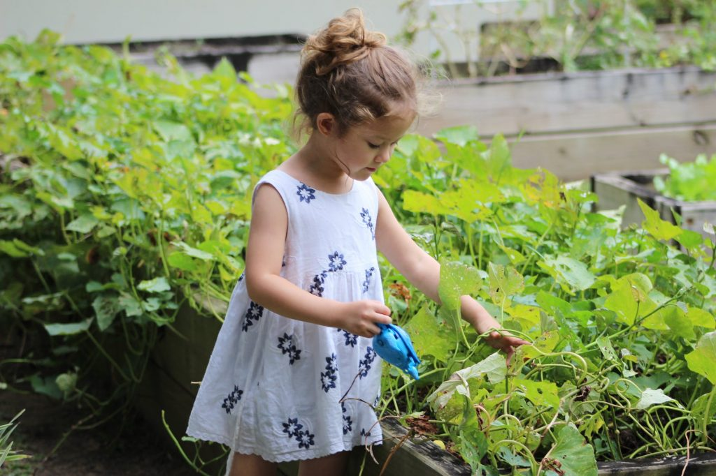 cultivar un huerto en casa o huerto montessori