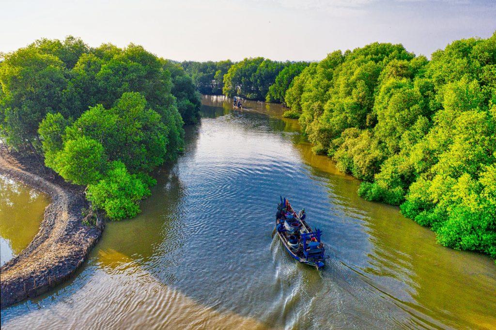 Día internacional de conservación del ecosistema de los manglares